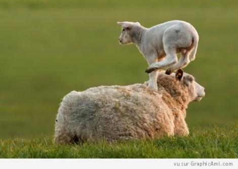 jouer-a-saute-mouton-500x355